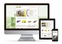 Webdesign Wordpress Pferdebremsen vermeiden